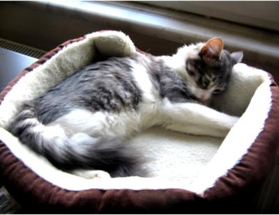 Cute cat in her cat bed