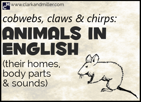 Animals in English (Plus Animal Body Parts and Sounds