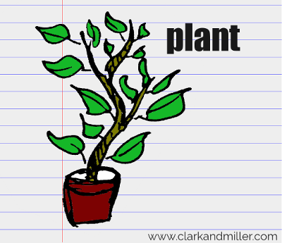 plant drawing with text