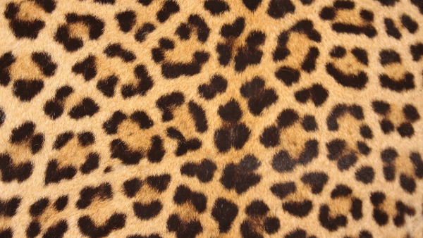 Leopard-print pattern
