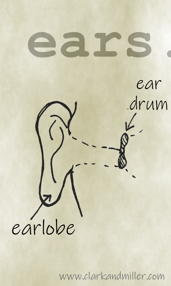 Ear with labels ear drum, earlobe