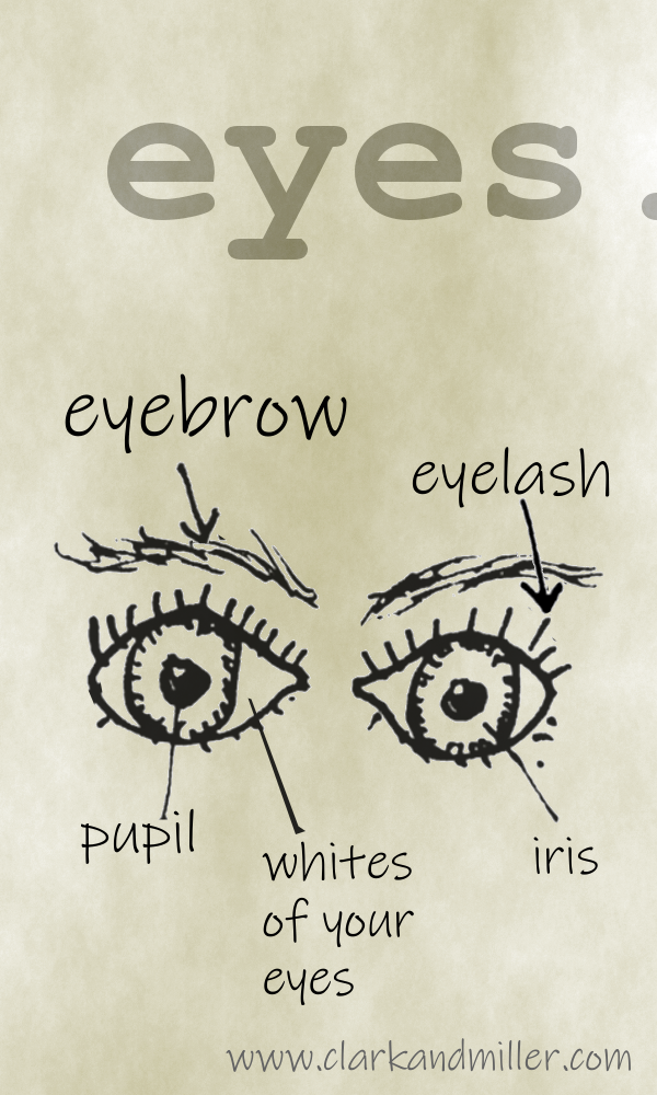 Eyes with labels eyebrow, eyelash, pupil, whites of your eyes, iris