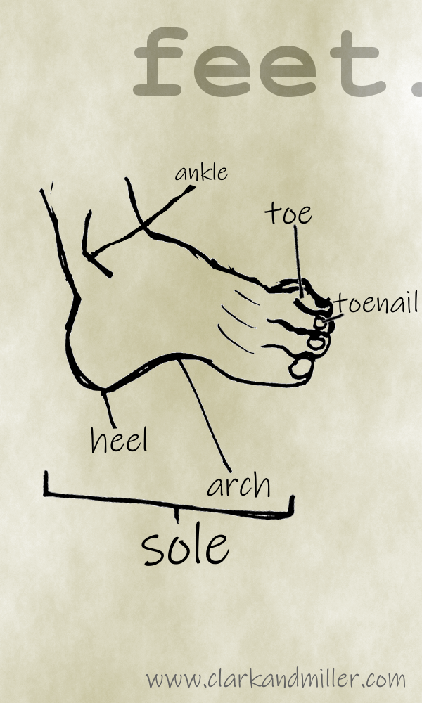 Feet with labels ankle, toe, toenail, heel, arch, sole