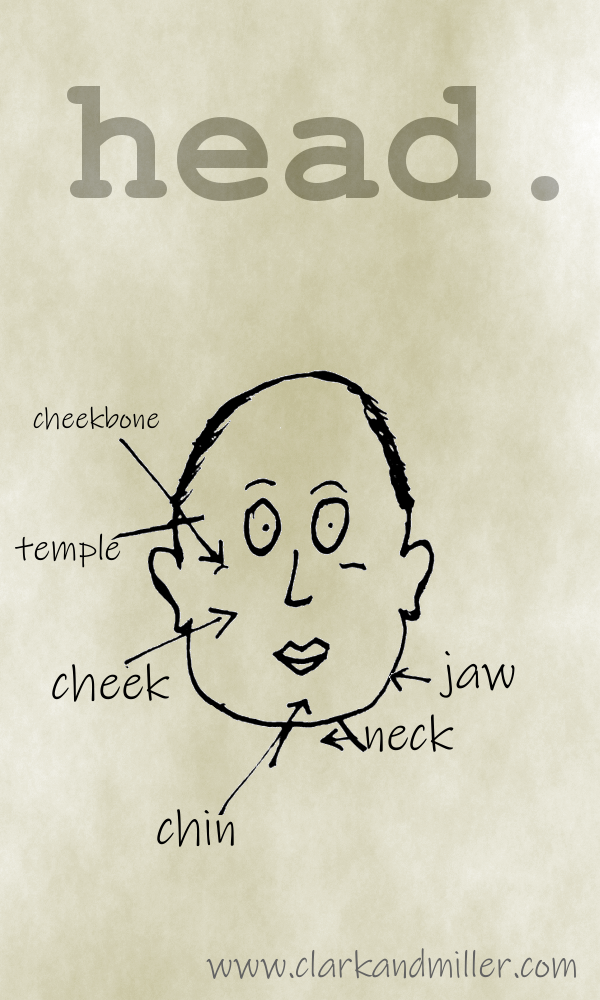 Head with labels cheekbone, temple, cheek, chin, neck, jaw