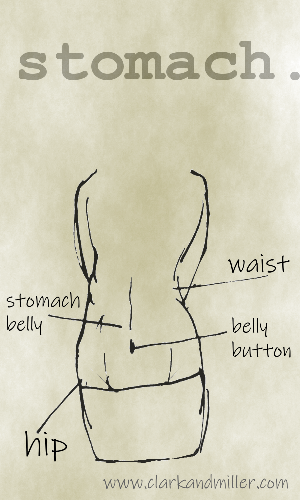 Stomach with labels waist, stomach, belly, belly button, hip