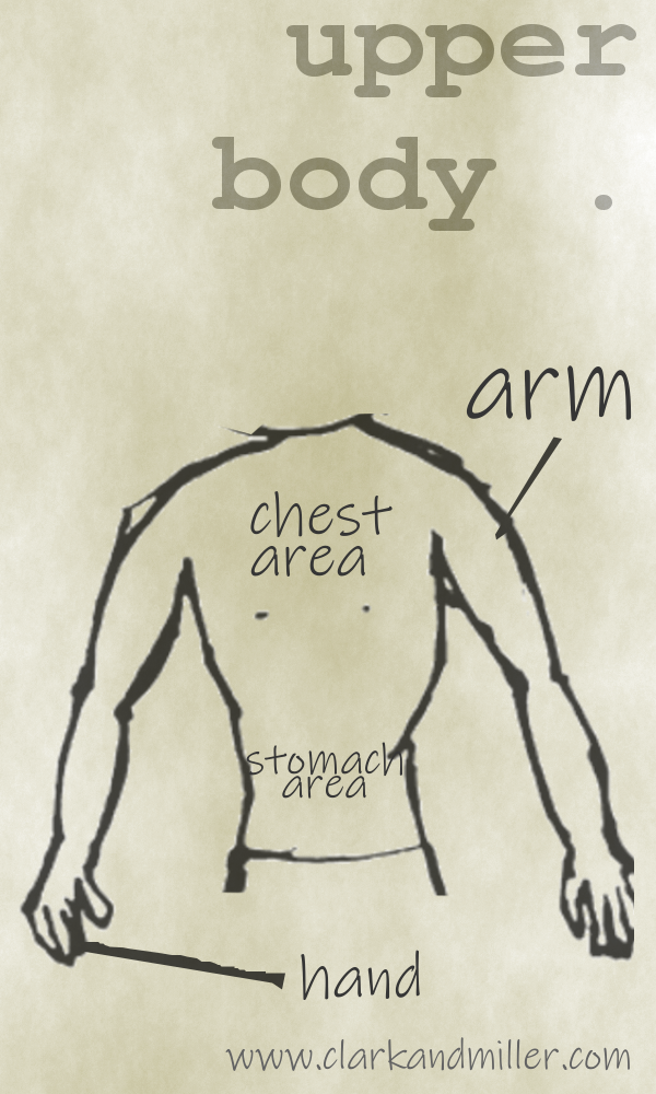 Upper body with labels arm, chest area, stomach area, hand