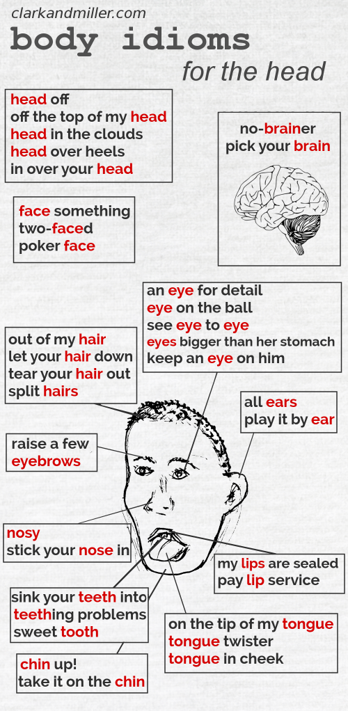 Body idioms with parts of the head