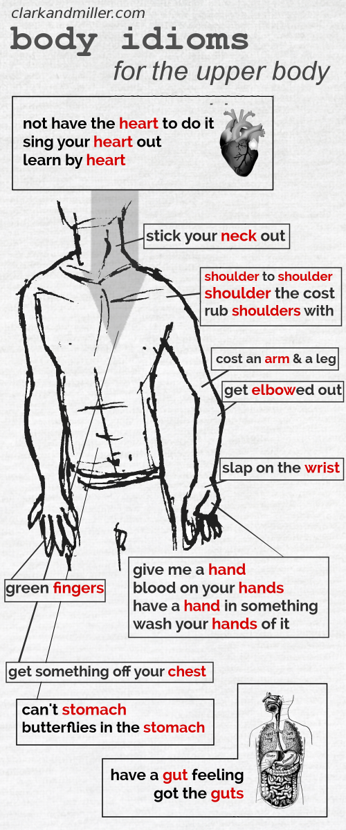 Body idioms with parts of the upper body