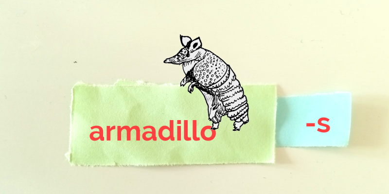 Sketch of an armadillo. The word 'armadillo' is written on green paper on the left. A hyphen and the letter S are written on blue paper on the right.