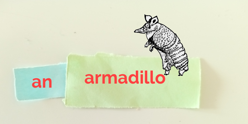 Sketch of an armadillo. The word 'an' is written on blue paper on the left. The word 'armadillo' is written on green paper on the right.